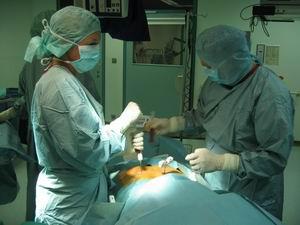 трансплантацию костного мозга в израиле